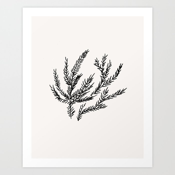 Summer Coral Fern Art Print