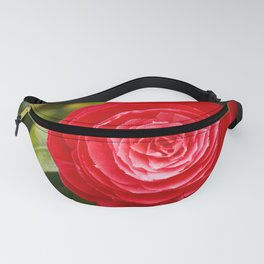 Camellia japonica Fanny Pack