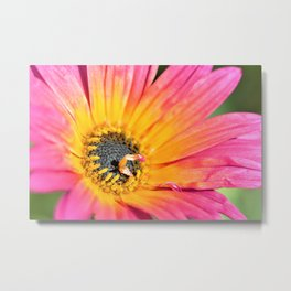 Beautiful Pink Imperfection Flower  by Reay of Light Photography Metal Print
