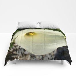Overhead Shot of A Cream Calla Lily In Soft Focus Comforters
