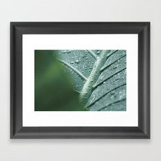Elephant Ear Leaf still life, fine art print, high quality macro, water drops photography Framed Art Print