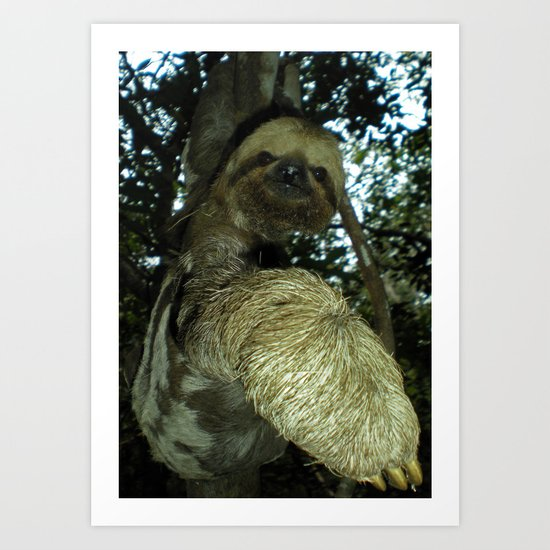 The sloth Art Print