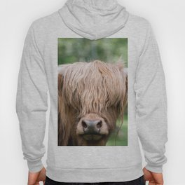 Portrait of a cute Scottish Highland Cattle Hoody