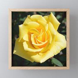 Yellow Rose for Mommy Framed Mini Art Print