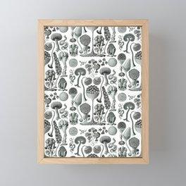 Ernst Haeckel - Mycetozoa Framed Mini Art Print