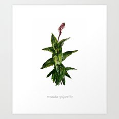 Peppermint Mentha × piperita Art Print