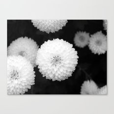 Centre of Attention Canvas Print