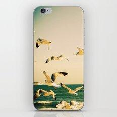Gulls Series 1 iPhone & iPod Skin