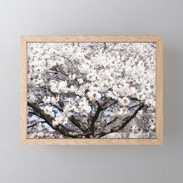 Springtime Blossoms Framed Mini Art Print