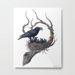 American Crow Metal Print