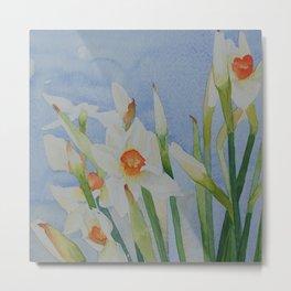 Narcissi daffodils Metal Print