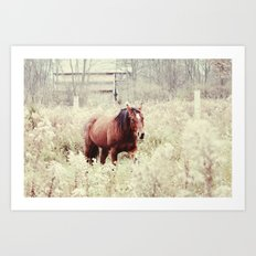 horse in the field Art Print