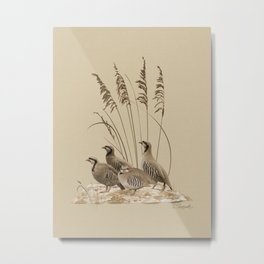 Chukar Partridges Metal Print
