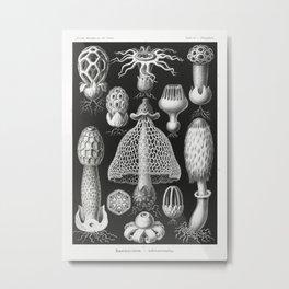 Basimycetes–Schwammpilze from Kunstformen der Natur (1904) by Ernst Haeckel. Metal Print