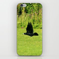 black crow in flight iPhone & iPod Skin