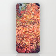 Red Fall iPhone & iPod Skin
