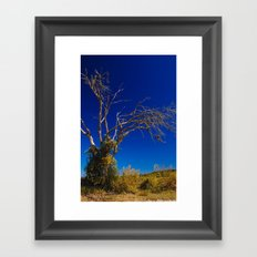 Naked Tree Framed Art Print