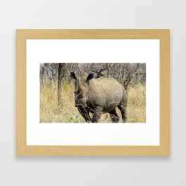 Black Rhino Framed Art Print