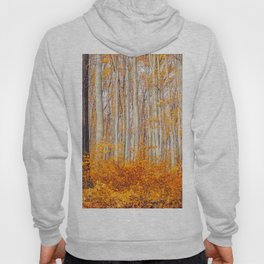 Golden Autumn Forest (Color) Hoody