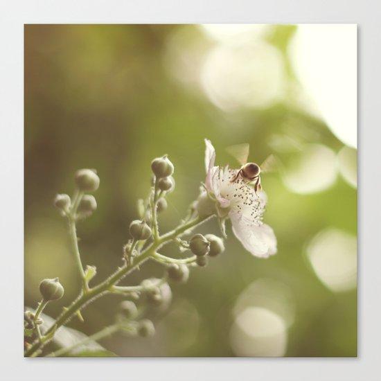 Busy Little Bee Bum Canvas Print