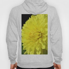 Glowing Yellow Dahlia Hoody