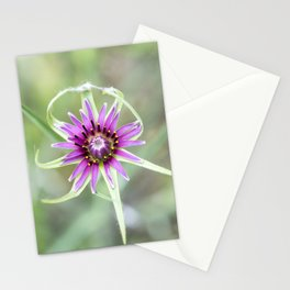 Tragopogon porrifolius L.  Stationery Cards