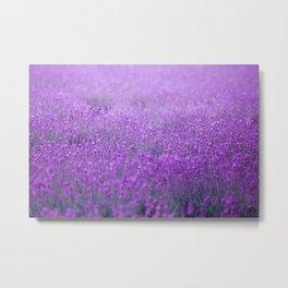 Rain on Lavender Metal Print