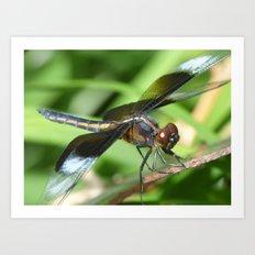 summer dragonfly VII Art Print