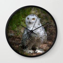 Alaskan Snowy Owl - Summer Wall Clock