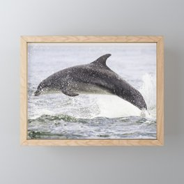The leaping dolphin Framed Mini Art Print