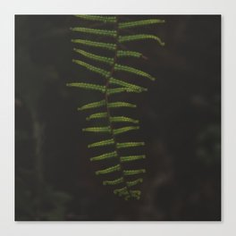Fern 1 Canvas Print