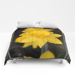 Trumpet Daffodil named Exception Comforters