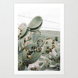 Cactus II Art Print