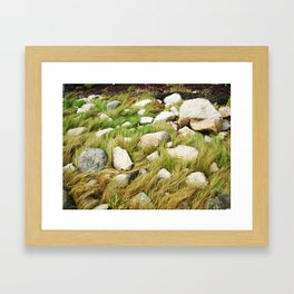 Maine Seagrass Framed Art Print