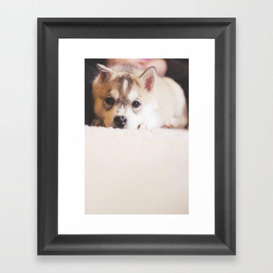 """siberian husky puppy - """"nova"""" Framed Art Print"""