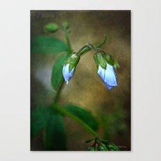 Blue Buds Canvas Print