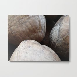 photo of 3 coconuts Metal Print