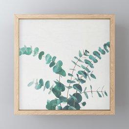Eucalyptus II Framed Mini Art Print