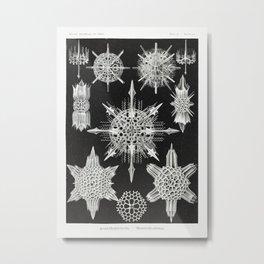 Acanthophracta–Wunderstrahlinge from Kunstformen der Natur (1904) by Ernst Haeckel. Metal Print