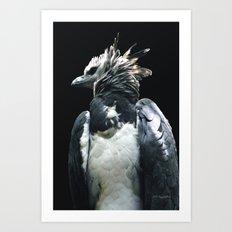 Harpy Eagle Art Print
