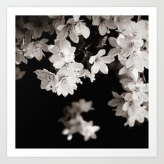 Little Whites ~ No.1 Art Print