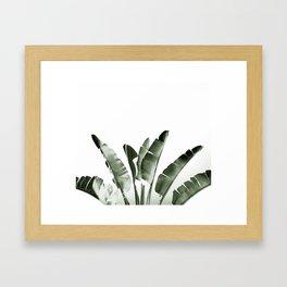 Traveler palm Framed Art Print