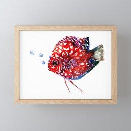 Scarlet Red Discus Framed Mini Art Print