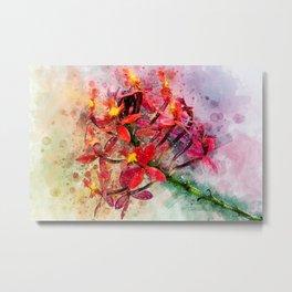 Epidendrum Metal Print