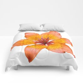 Coral Colored Lily Isolated on White Comforters