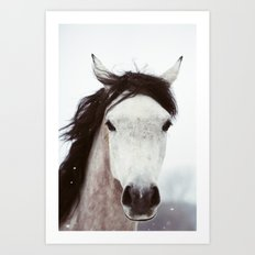 Winter Horse Art Print