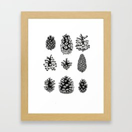 Pinecone study Framed Art Print