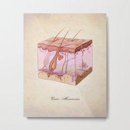 Human Anatomy Skin Art Print Metal Print