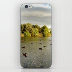 Evening Swim iPhone & iPod Skin