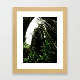 Redwoods #4 Framed Art Print